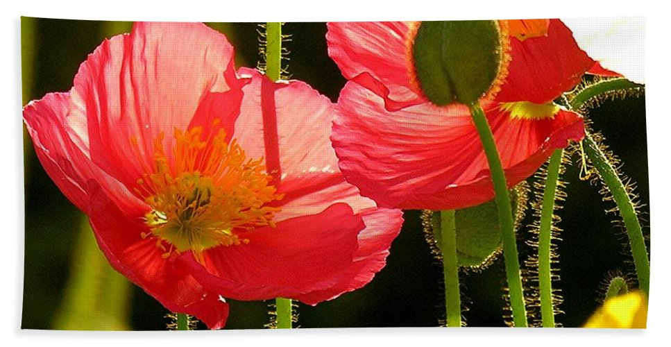 Poppy Hand Towel featuring the photograph Poppy by Diane Greco-Lesser