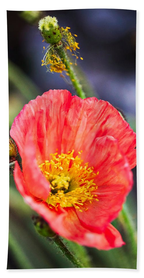 Agriculture Hand Towel featuring the photograph Poppy Flower by Fornalczyk Aleksandra
