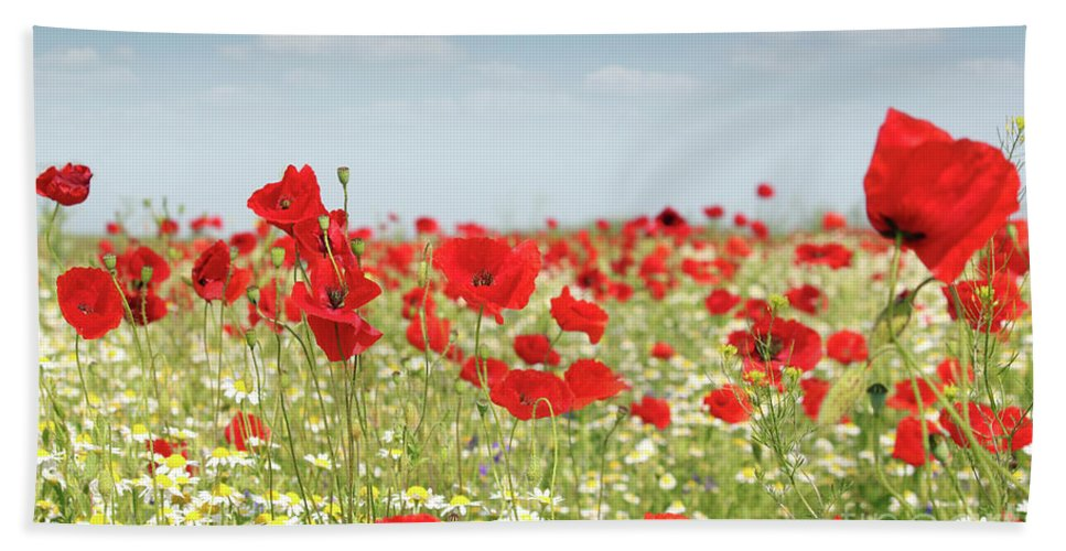 Camomile Hand Towel featuring the photograph Poppy Flowers Field Nature Spring Scene by Goce Risteski