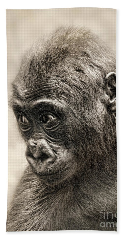 Jim Fitzpatrick Hand Towel featuring the photograph Portrait Of A Baby Gorilla Digitally Altered by Jim Fitzpatrick