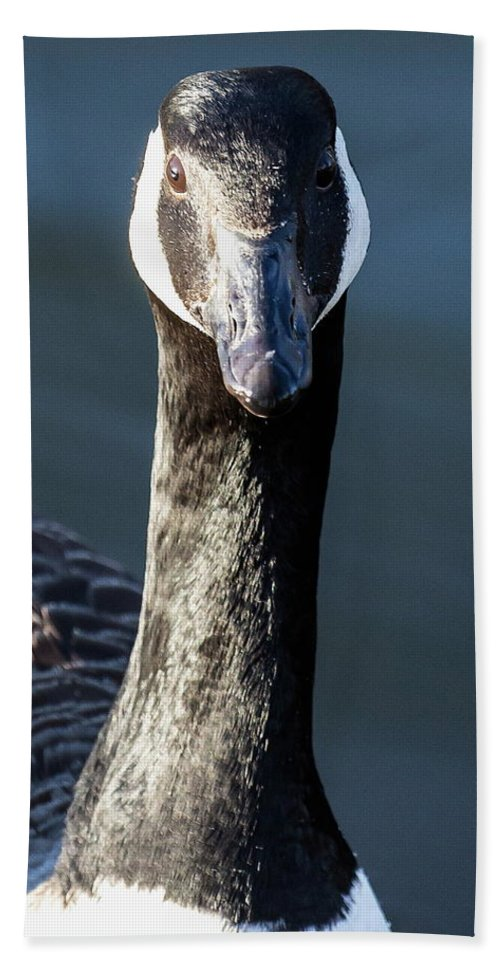 Canada Bath Sheet featuring the photograph Portrait Of A Canada Goose by Jeff Townsend