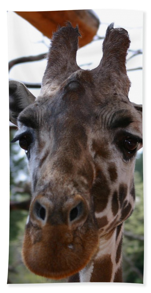 Giraffe Hand Towel featuring the photograph Portrait Of A Giraffe by Anthony Jones