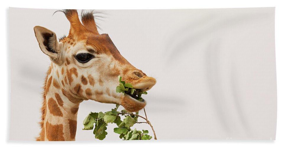 Africa Bath Sheet featuring the photograph Portrait Of A Rothschild Giraffe IIi by Nick Biemans