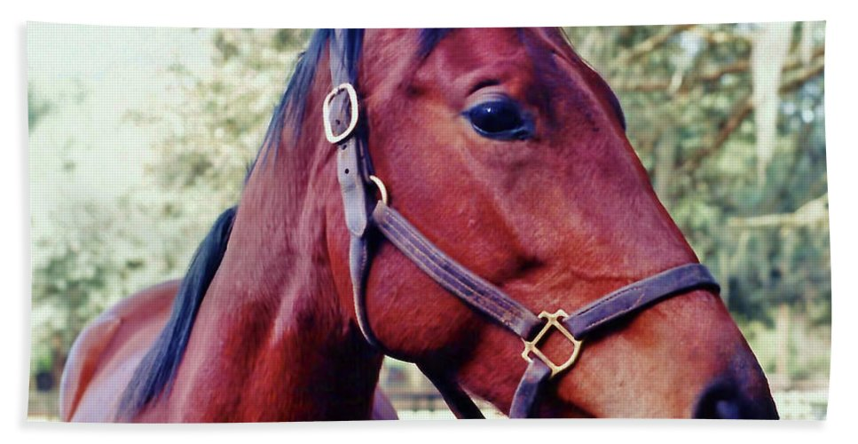 Horse Bath Sheet featuring the photograph Portrait Of A Thoroughbred by D Hackett