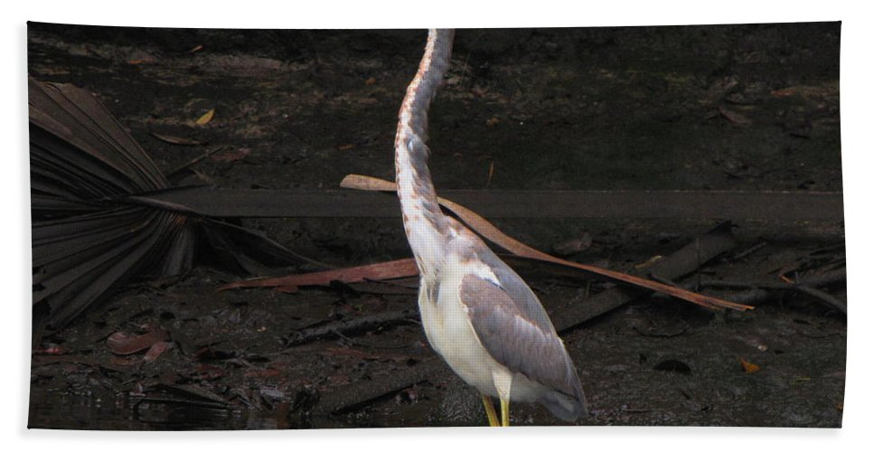 Tri-colored Heron Hand Towel featuring the photograph Portrait Of A Tri-colored Heron by Barbara Bowen