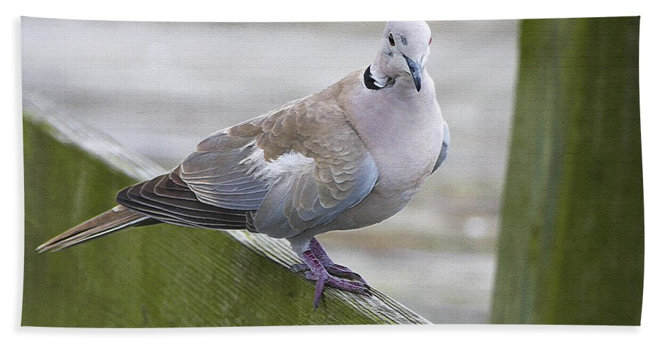 Bird Hand Towel featuring the photograph Posing On The Fence by Deborah Benoit