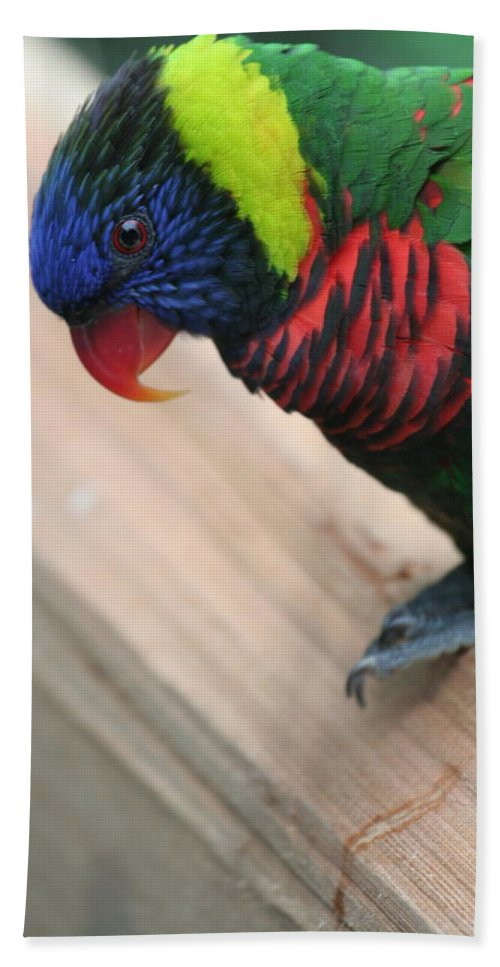 Lorikeet Hand Towel featuring the photograph Post Position by Laddie Halupa