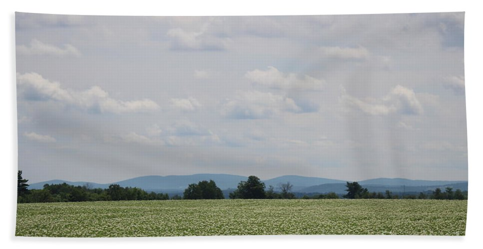Potato Blossoms Hand Towel featuring the photograph Potato Blossoms In Corinna Maine by Colleen Snow