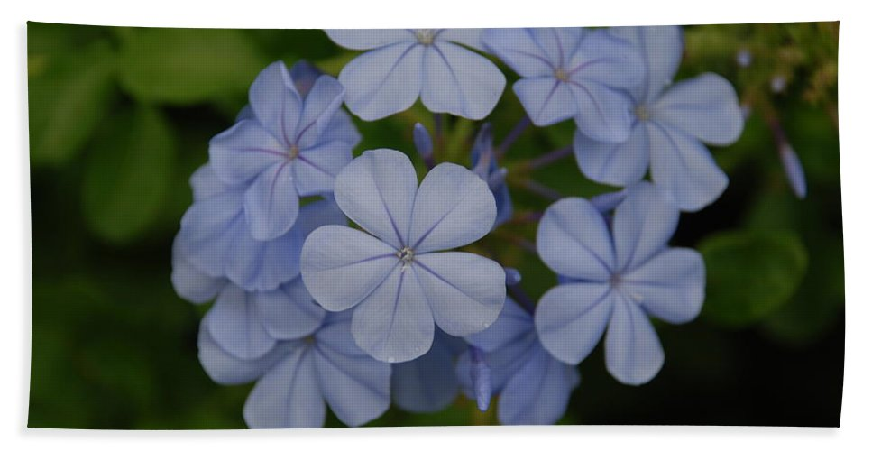 Macro Bath Towel featuring the photograph Powder Blue Flowers by Rob Hans