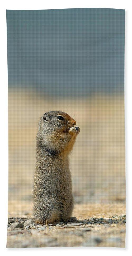 Prairie Dog Hand Towel featuring the photograph Prairie Dog by Sebastian Musial