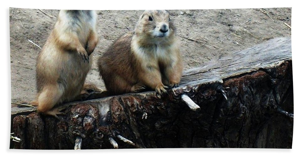 Prairie Dogs Hand Towel featuring the photograph Prairie Dogs by Katie Slaby