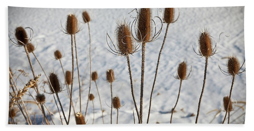 Winter Hand Towel featuring the photograph Prairie Seedheads by Steve Gadomski