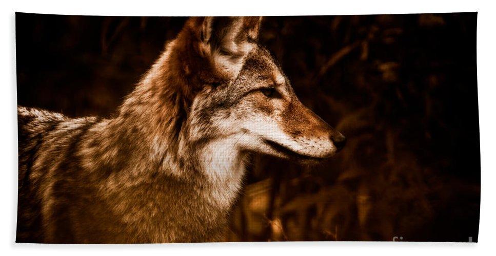 Prairie Wolf Bath Sheet featuring the photograph Prairie Wolf Portrait by Venetta Archer