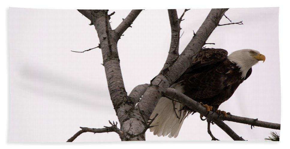 American Bald Eagle Bath Sheet featuring the photograph Pre Flight by Linda Kerkau