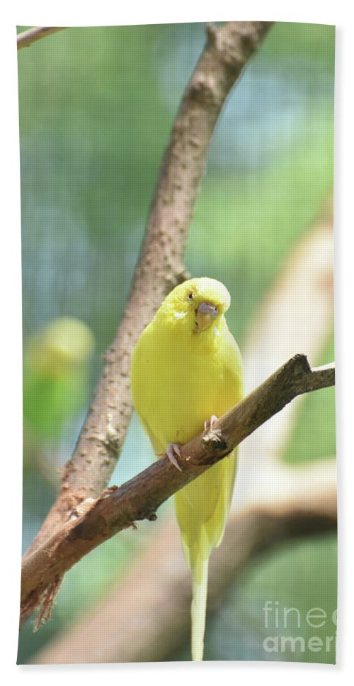 Budgie Hand Towel featuring the photograph Precious Yellow Budgie Parakeeet In The Wild by DejaVu Designs