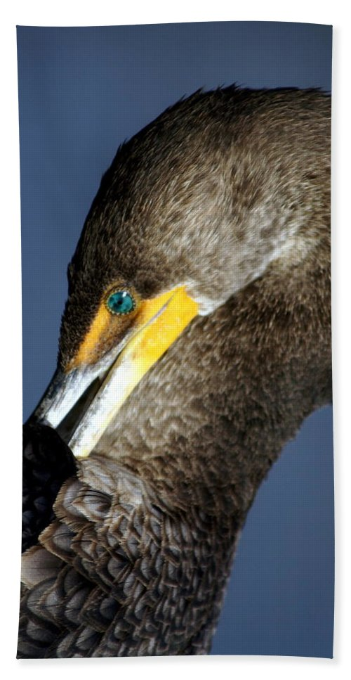 Everglades National Park Hand Towel featuring the photograph Preening by Marty Koch
