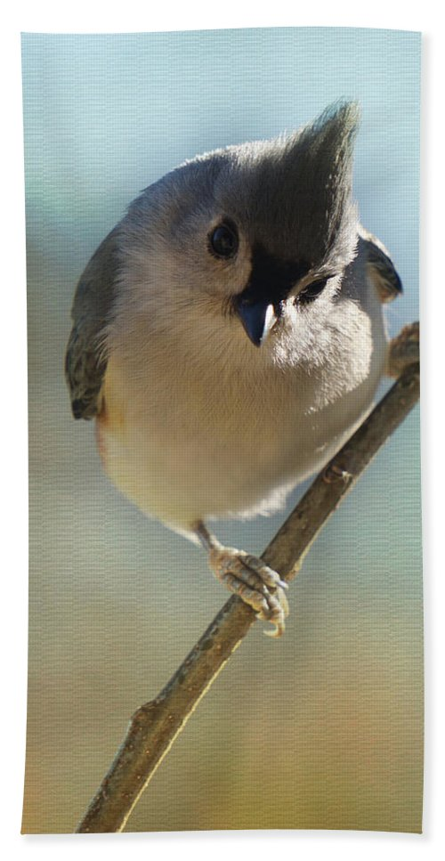 Titmouse Hand Towel featuring the photograph Pretty Eyes by Karen Beasley