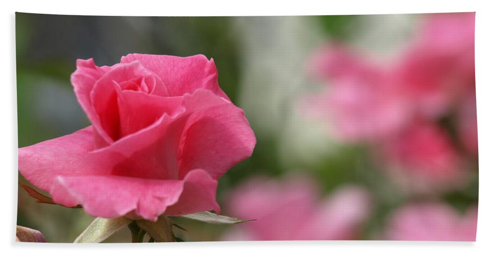 Pink Hand Towel featuring the photograph Pretty In Pink Rose by Cathy Smith