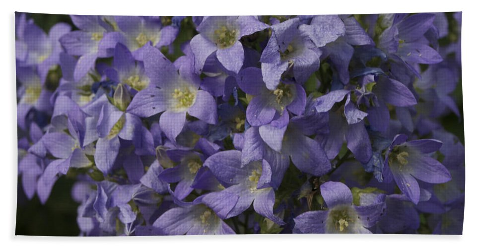 Purple Bath Sheet featuring the photograph Pretty In Purple by Chad Kroll