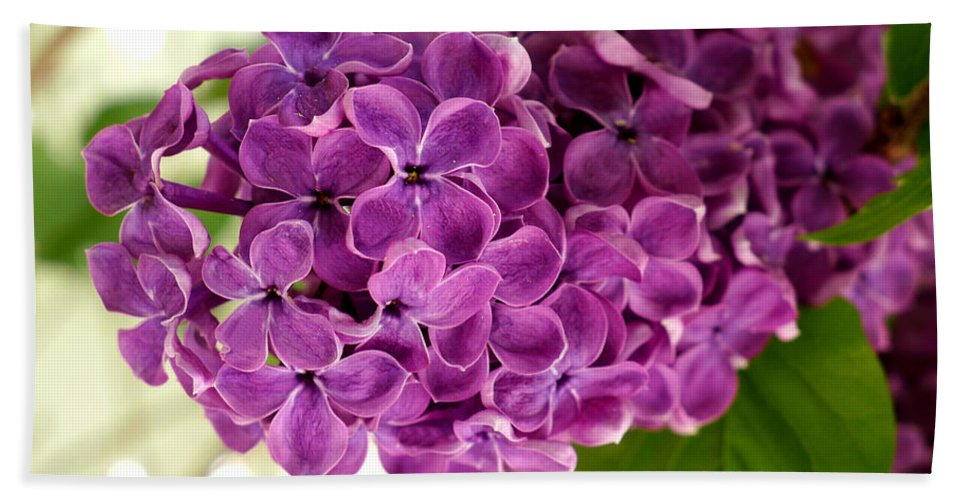 Lilac Hand Towel featuring the photograph Pretty Lilac Bush by Lena Photo Art