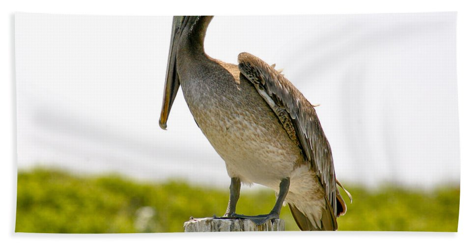 Pelican Bath Towel featuring the photograph Pretty Pelican by Marilyn Hunt
