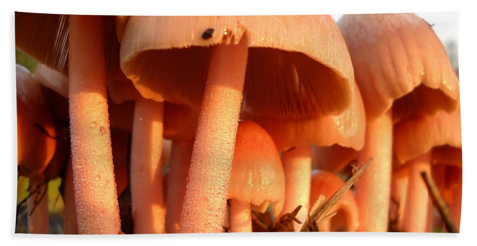 Pink Mushroom Hand Towel featuring the photograph Pretty Pink Fairy Shelters by Kent Lorentzen