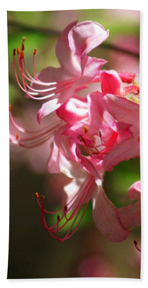 Flowers Bath Towel featuring the photograph Pretty Pink by Marty Koch