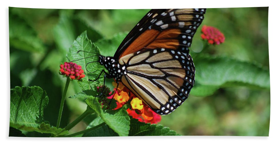 Monarch Hand Towel featuring the photograph Pretty Spots by Lori Tambakis