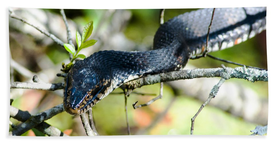 Banded Watersnake Hand Towel featuring the photograph Prey Beware by Norman Johnson