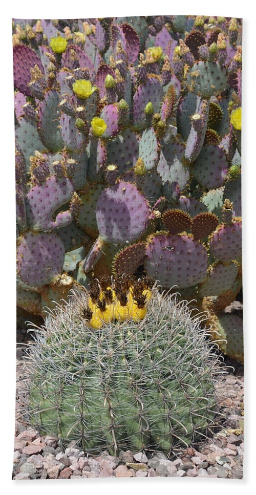 Cactus Bath Sheet featuring the photograph Prickly Pear Blooms by Aimee L Maher ALM GALLERY