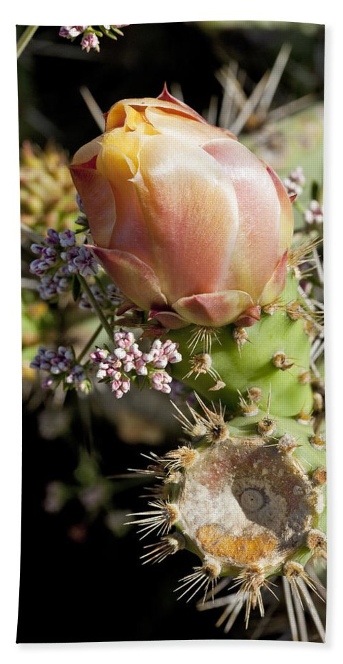 Prickly Pear Bath Sheet featuring the photograph Prickly Pear Flower 4 by Kelley King