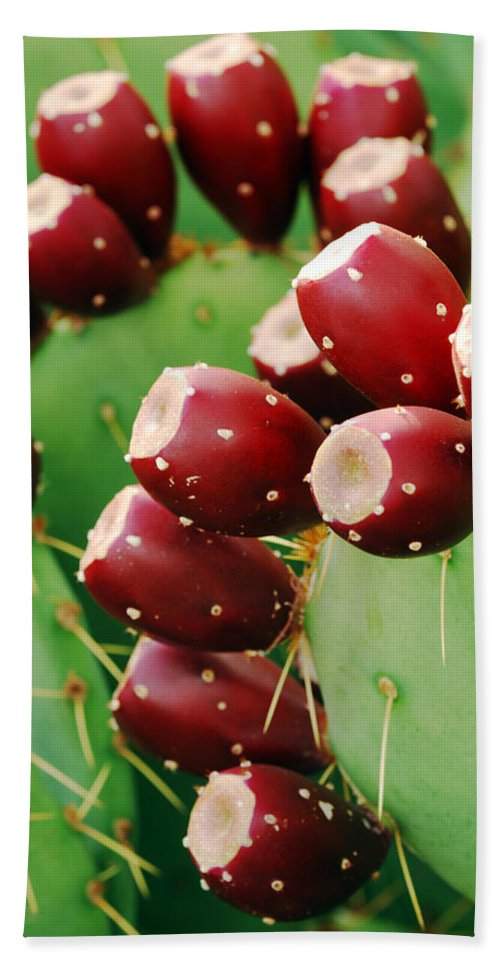 Cactus Hand Towel featuring the photograph Prickly Pear Fruit by Jill Reger