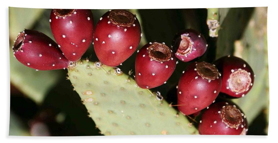 Plant Hand Towel featuring the photograph Prickly Pear-jerome Arizona by Nelson Strong