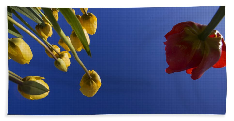 Floral Hand Towel featuring the photograph Primary Colors by Karen Ulvestad