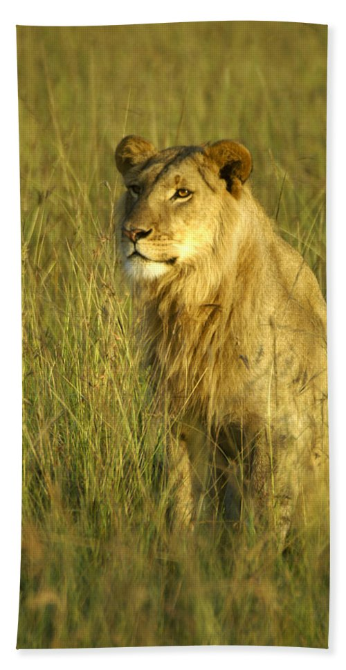 Africa Hand Towel featuring the photograph Princely Lion by Michele Burgess