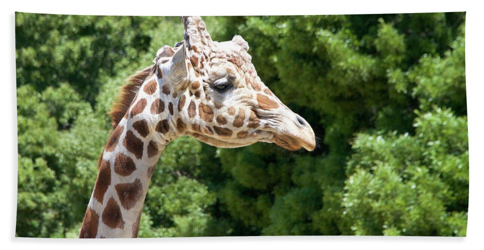 African Bath Sheet featuring the photograph Profile Of A Giraffe by Sheila Fitzgerald