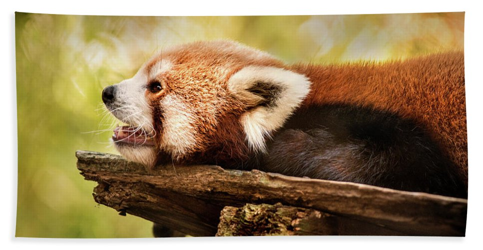 Animal Hand Towel featuring the photograph Profile Of A Red Panda by Don Johnson