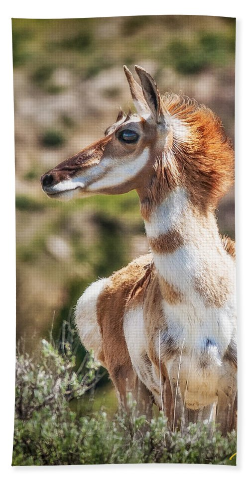 Animals Hand Towel featuring the photograph Pronghorn Mother by Rikk Flohr