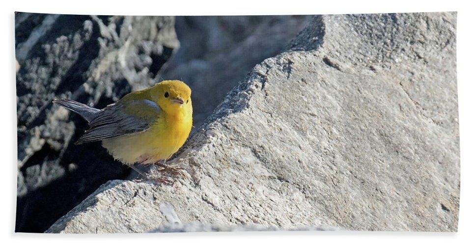 Birds Hand Towel featuring the photograph Prothonotary Warbler by David Lipsy