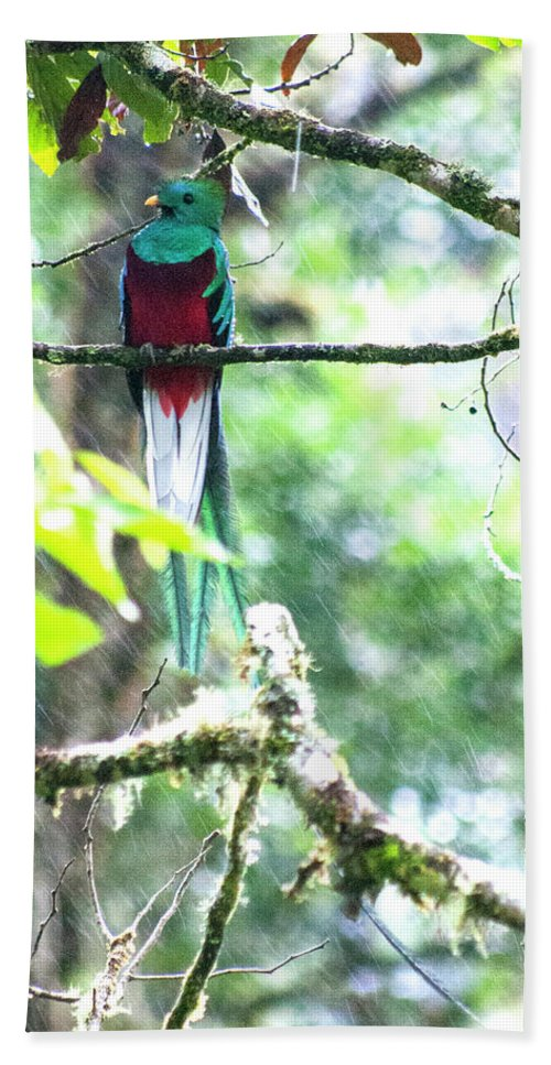 Resplendent Quetzal Hand Towel featuring the photograph Proud by Wes Hanson