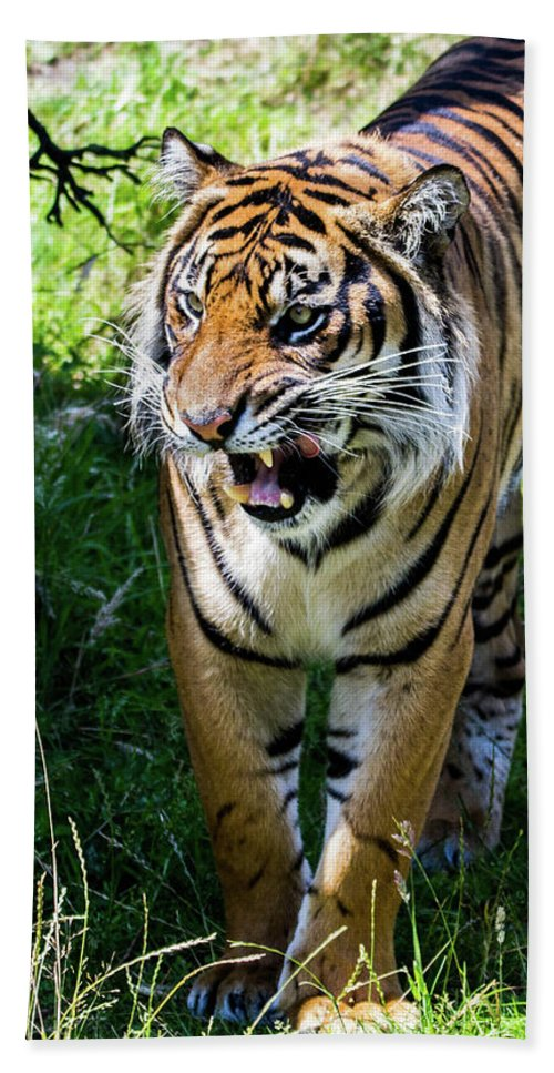 Tiger Hand Towel featuring the photograph Prowler by James Farrell