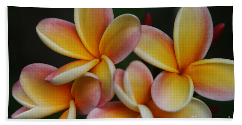 Aloha Bath Sheet featuring the photograph Pua Melia Plumeria Kuulei Haiku by Sharon Mau