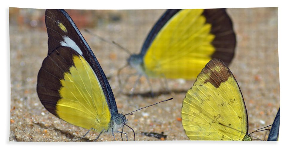 Butterflies Hand Towel featuring the photograph Puddling by Rashdy Arshad