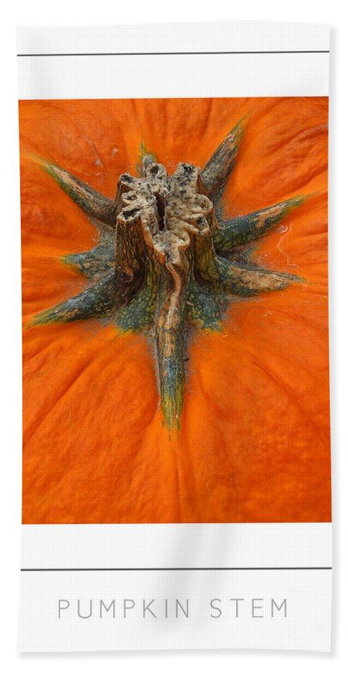 Pumpkin Hand Towel featuring the photograph Pumpkin Stem Poster by Mike Nellums