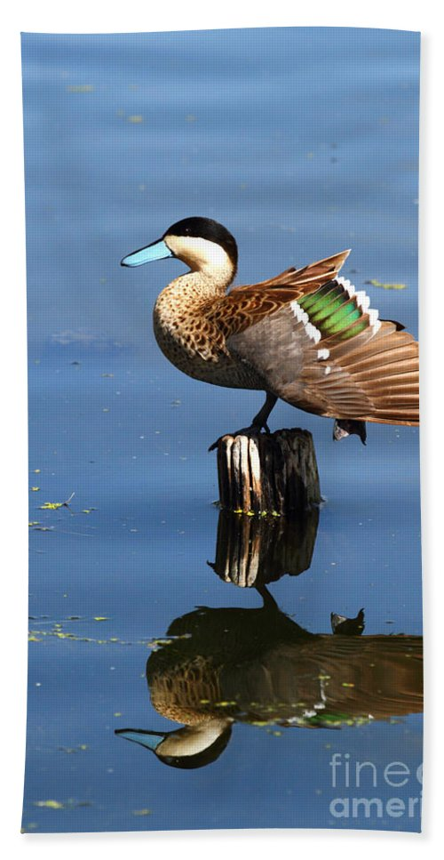 Duck Bath Sheet featuring the photograph Puna Teal Reflections by James Brunker