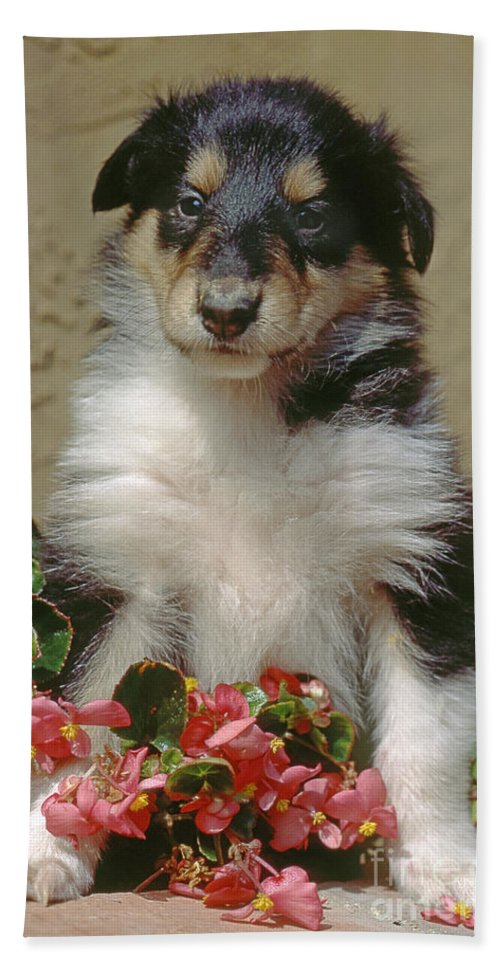 Animals Bath Sheet featuring the photograph Pup In The Flowers by Robert Chaponot