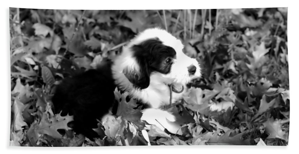Old Hand Towel featuring the photograph Puppy In The Leaves by Kathleen Struckle