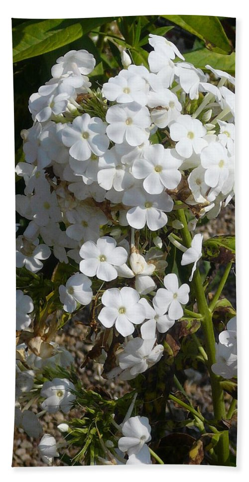 White Flowers Hand Towel featuring the photograph Pure Beauty by Connie Young