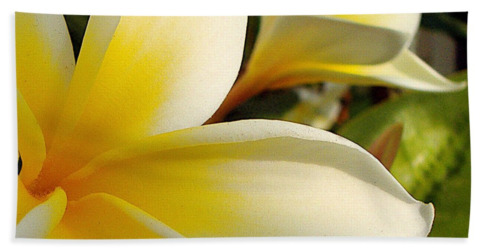 Flowers Bath Sheet featuring the photograph Pure Beauty Plumeria Flowers by Jerome Stumphauzer