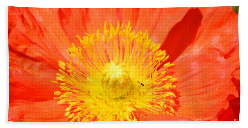 Pure Poppy Sunshine Hand Towel featuring the photograph Pure Poppy Sunshine by Maria Urso